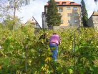 Bewohner als Wengerte, Weinbau Residenz Schloss Stetten, Weinanbau Residenz Schloss Stetten